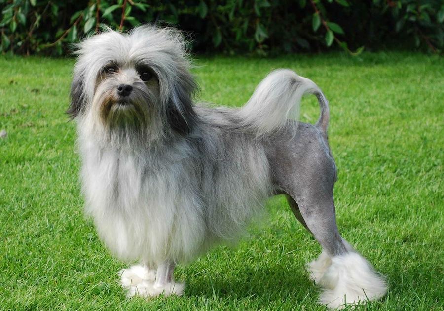 Anjing jenis ini sulit ditemukan di tempat biasa ccfa28f861