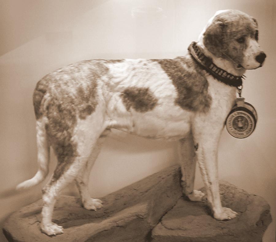 Alpine Spaniel Dog Breed Standards